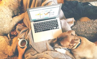 Cuddles: Dogs & Blogs.