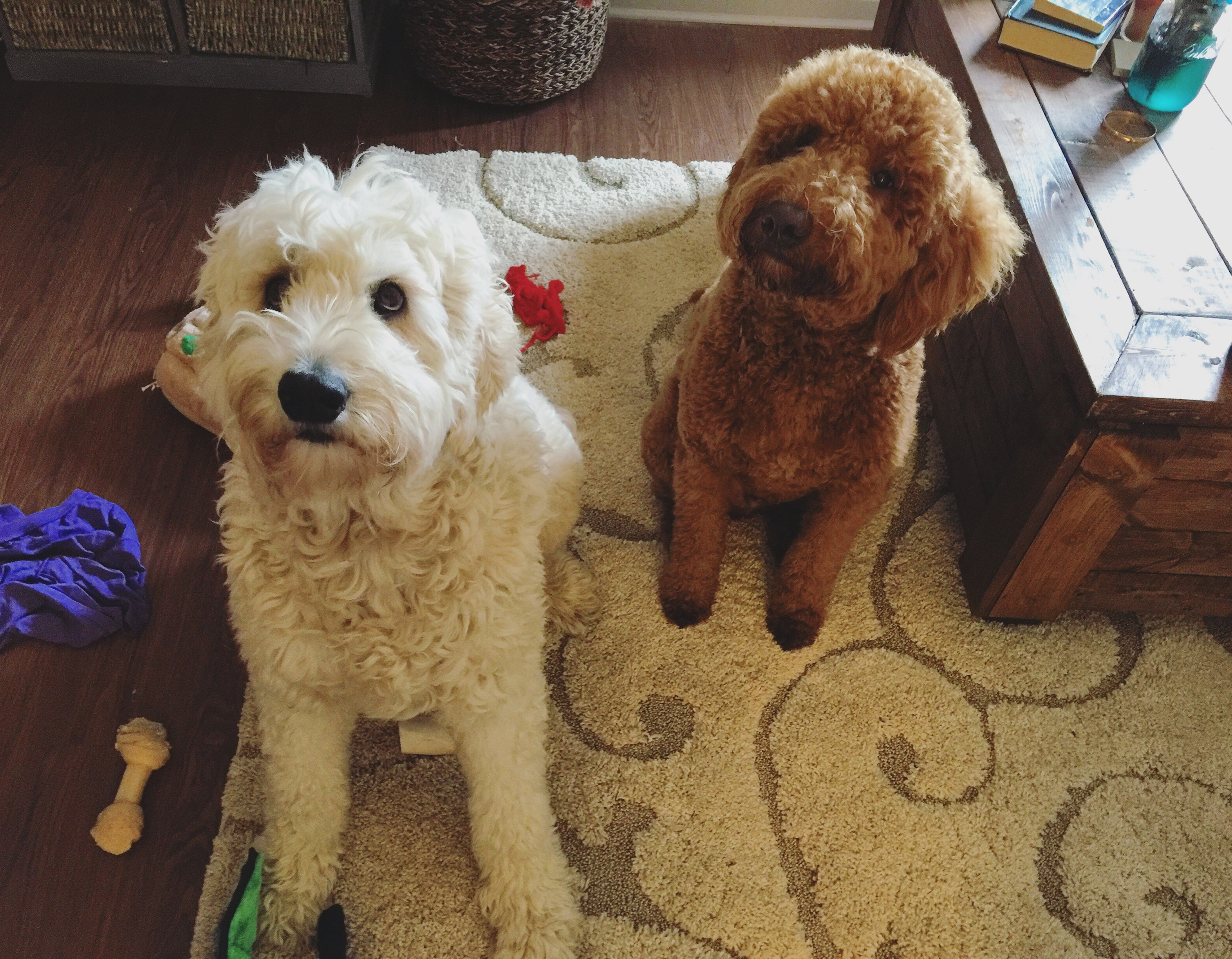 grumples and kona the doodles
