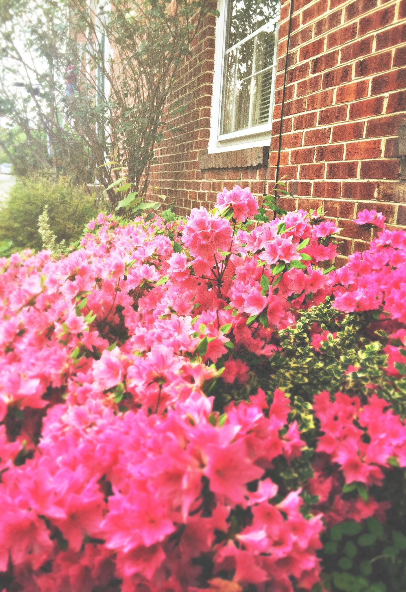 Old Town Alexandria Washington D.C.