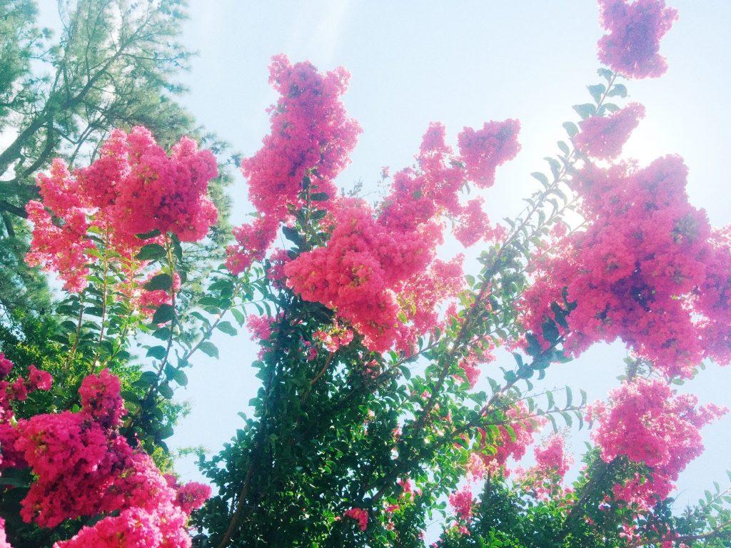 flower charlotte nc