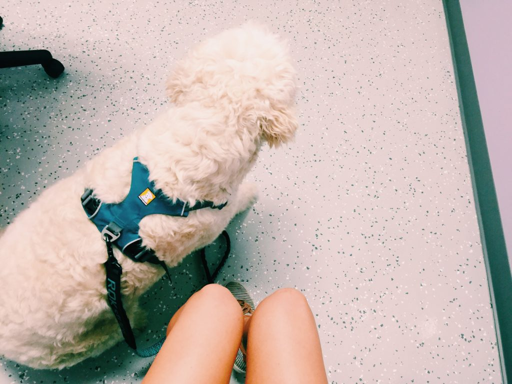 grumples at the vet