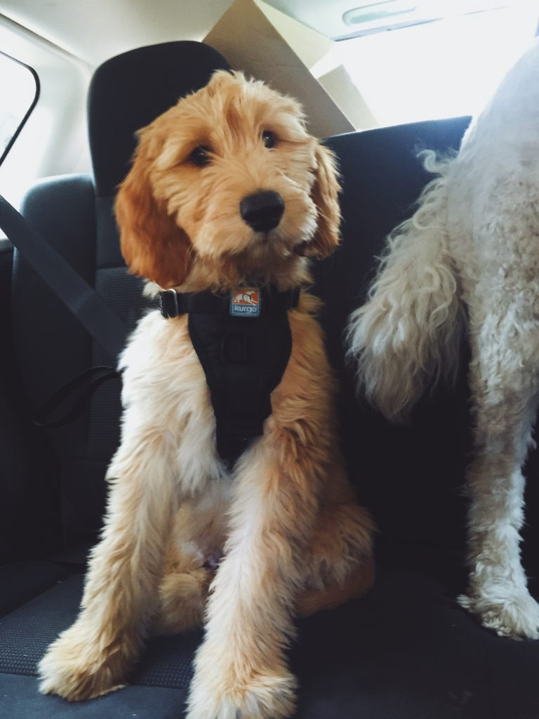 leo and his seatbelt