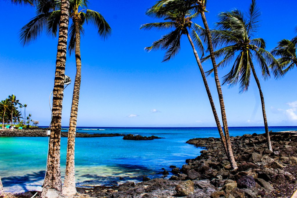 activities on the big island kona beach hawaii travel palm trees
