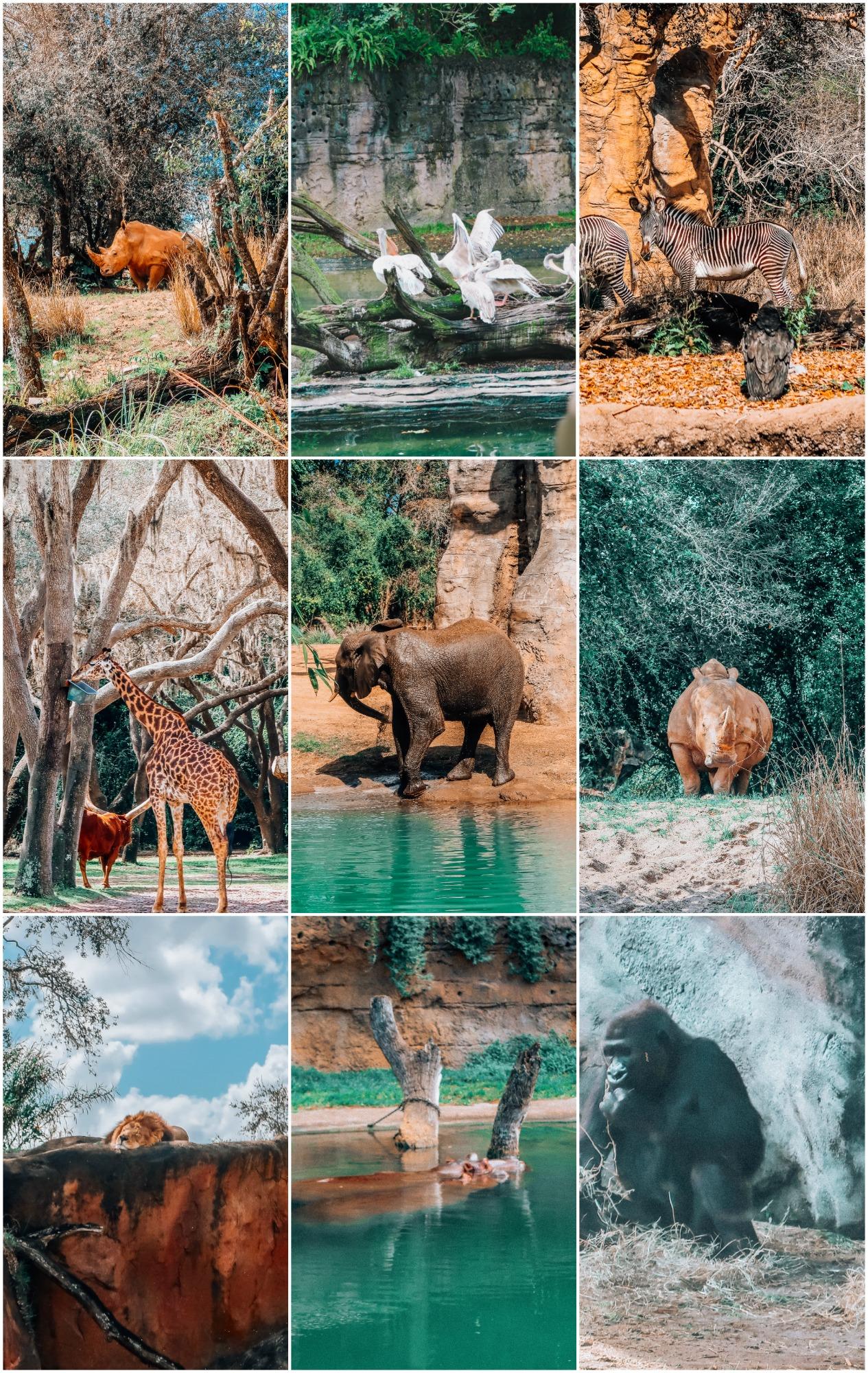 The Animal Kingdom Walt Disney World Itinerary Safari
