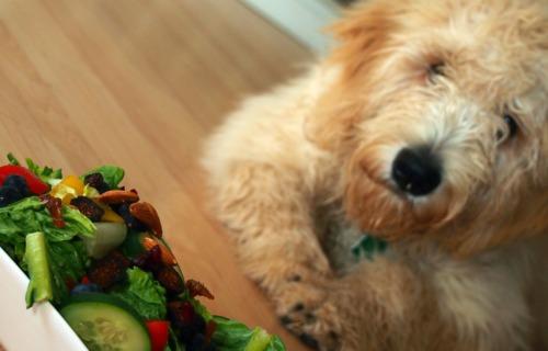 Mr. Grumples Wants Some Salad