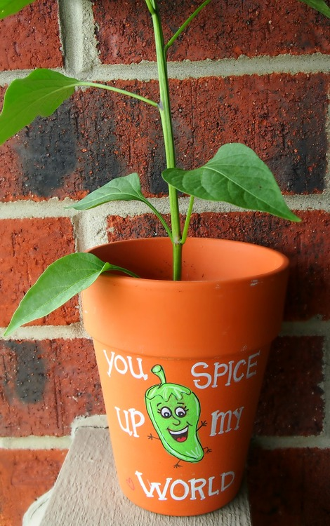 You Spice Up My World : Plant Gift :) DIY