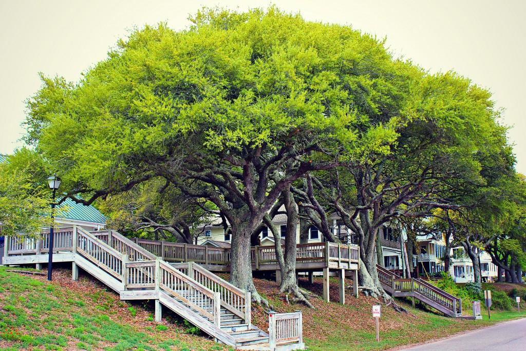 Southern Trees Southport North Carolina