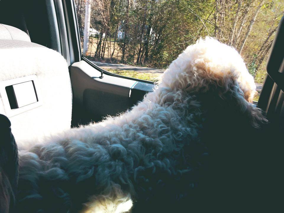 grumples car ride
