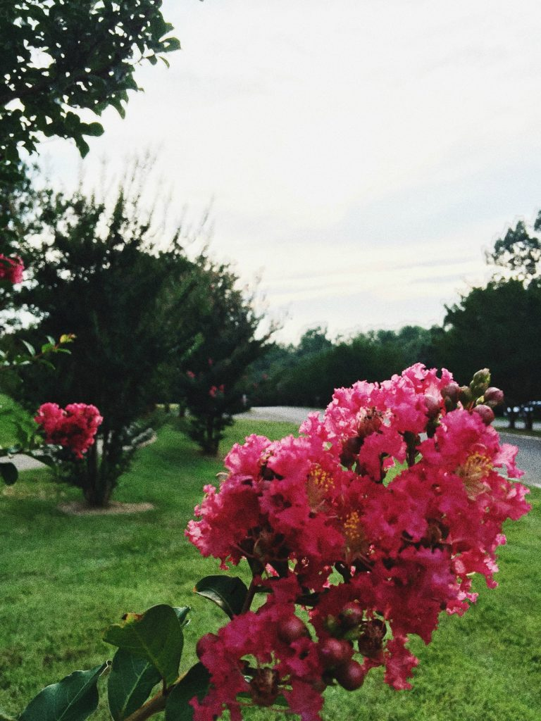 Gorgeous flowers on my run