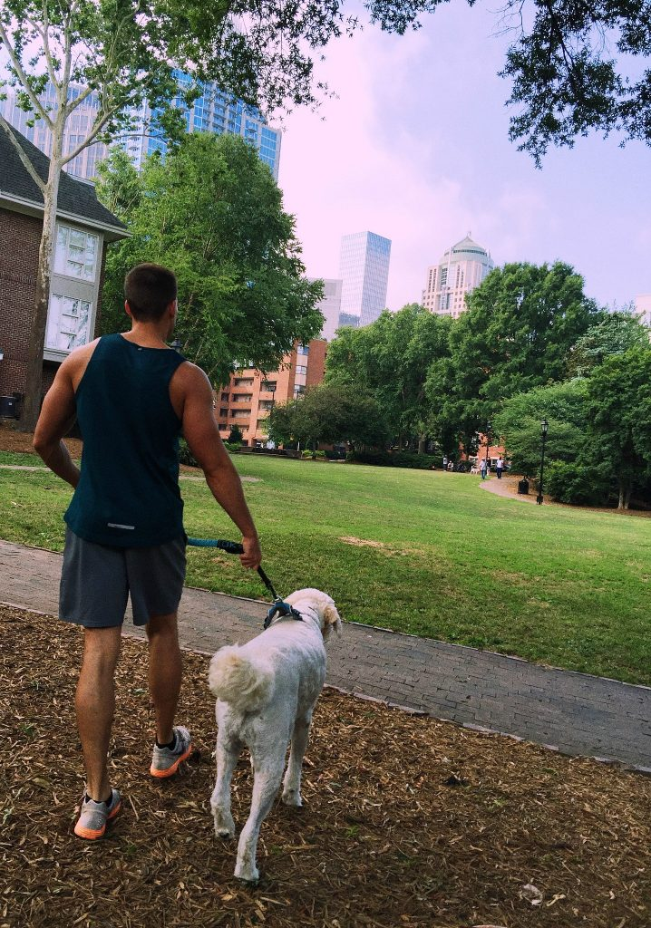 Dog Walk with MR. GRUMPLES Uptown Charlotte NC