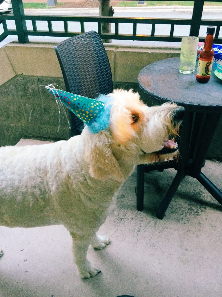 Mr. Grumples the Goldendoodle is five! Birthday Party Time :)