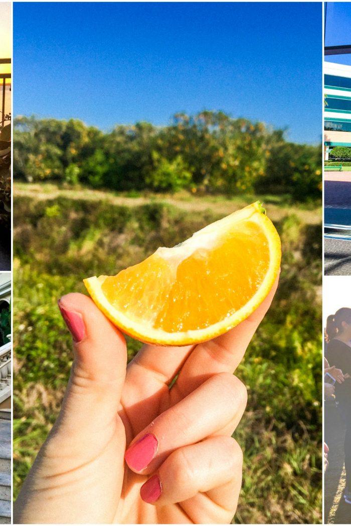 Orange You Glad I Visited The Groves?