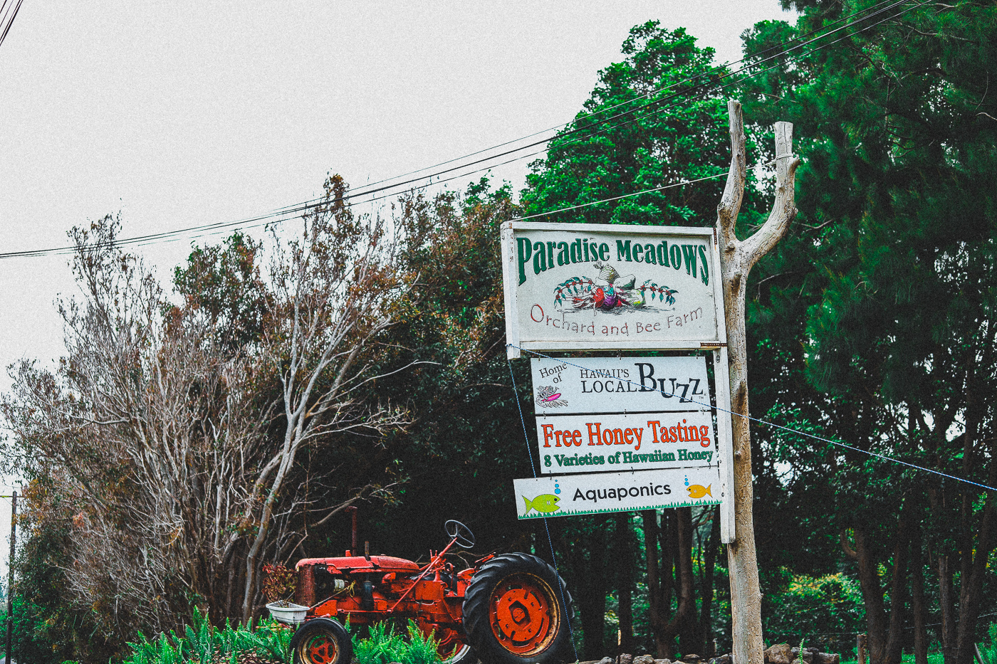 Paradise Meadows Farm South Point