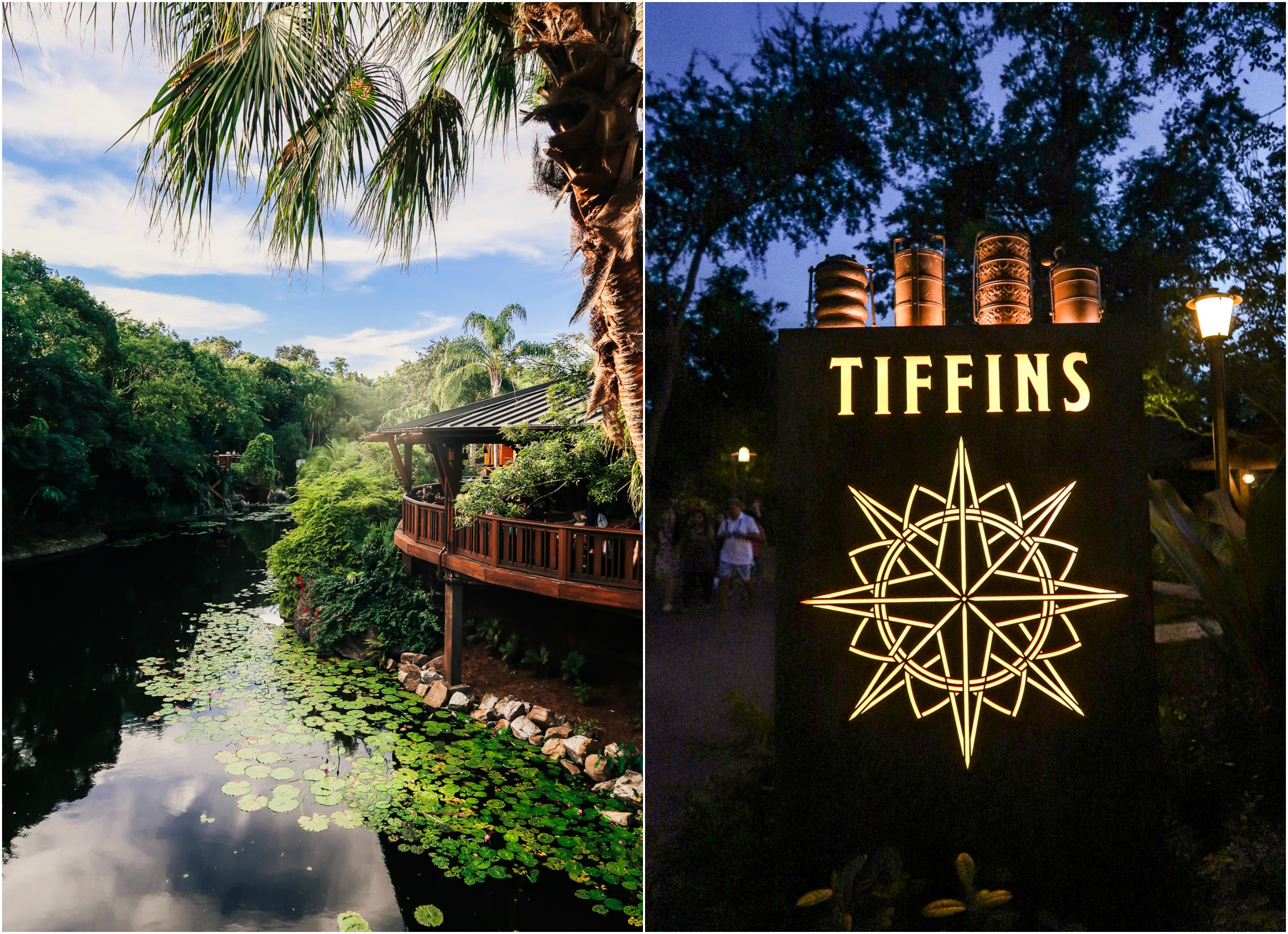 Dinner At Tiffans Animal Kingdom Disney World Travel Eats Guide