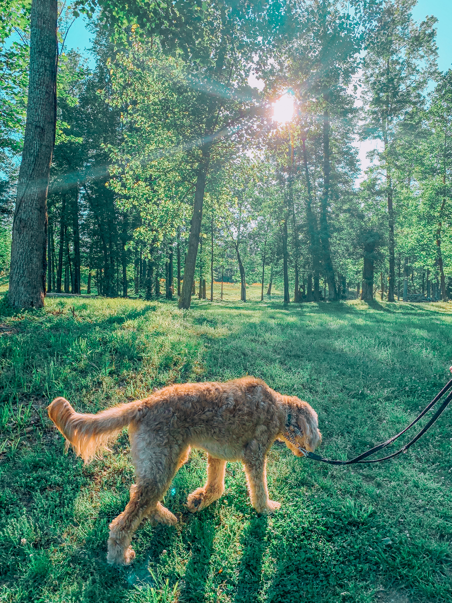 fitness trails Charlotte North Carolina rock hill South Carolina the river walk fitness walking golden doodle Leo doodle dog pet friendly