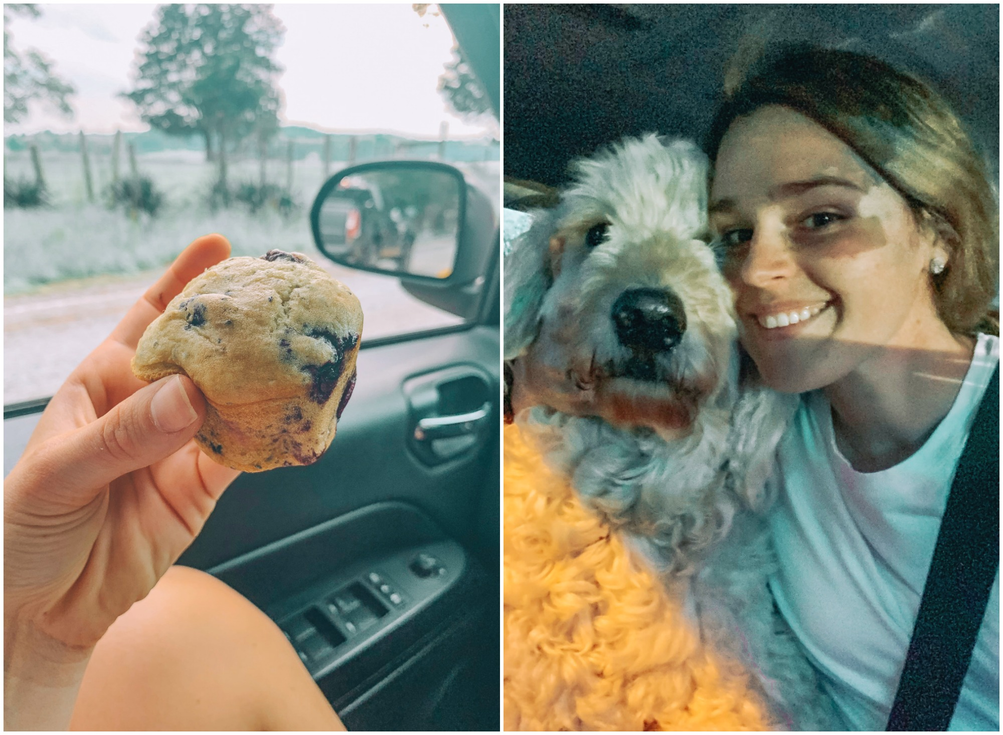 gluten free muffins Carolinas North Carolina South Carolina golden doodle country