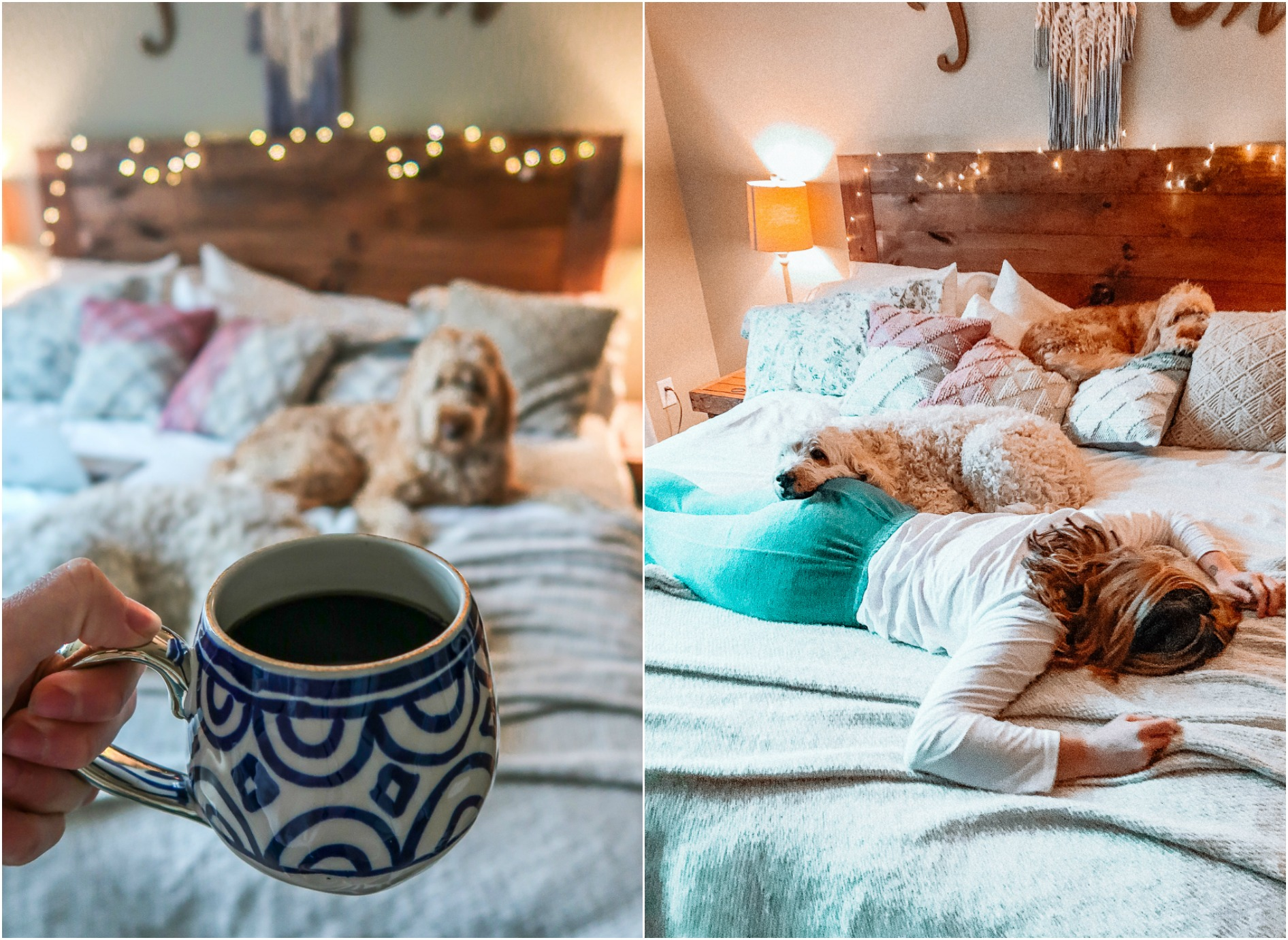 coffee, bedroom, golden doodle, dogs