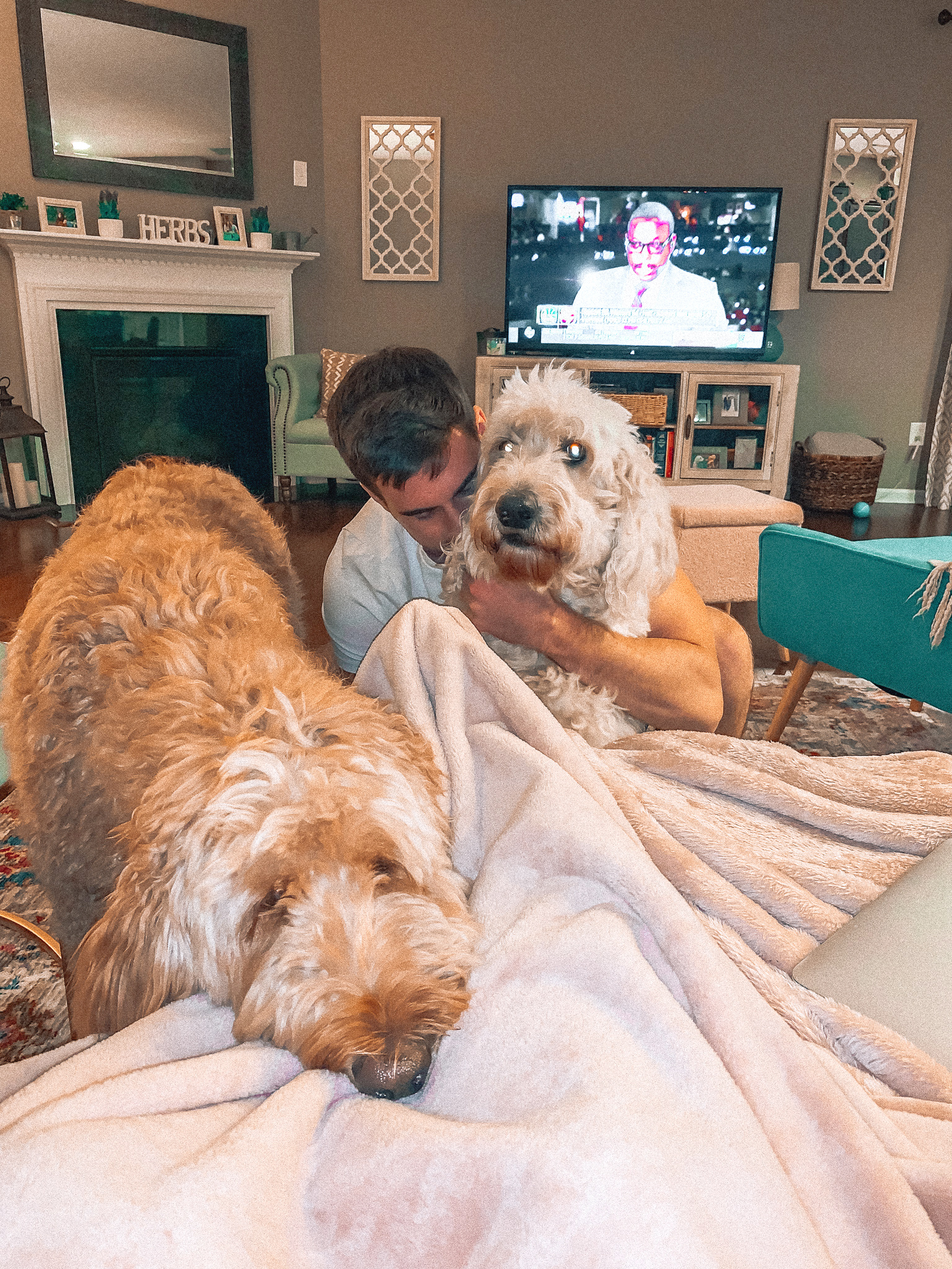 dogs, golden doodles, grumbles, Leo