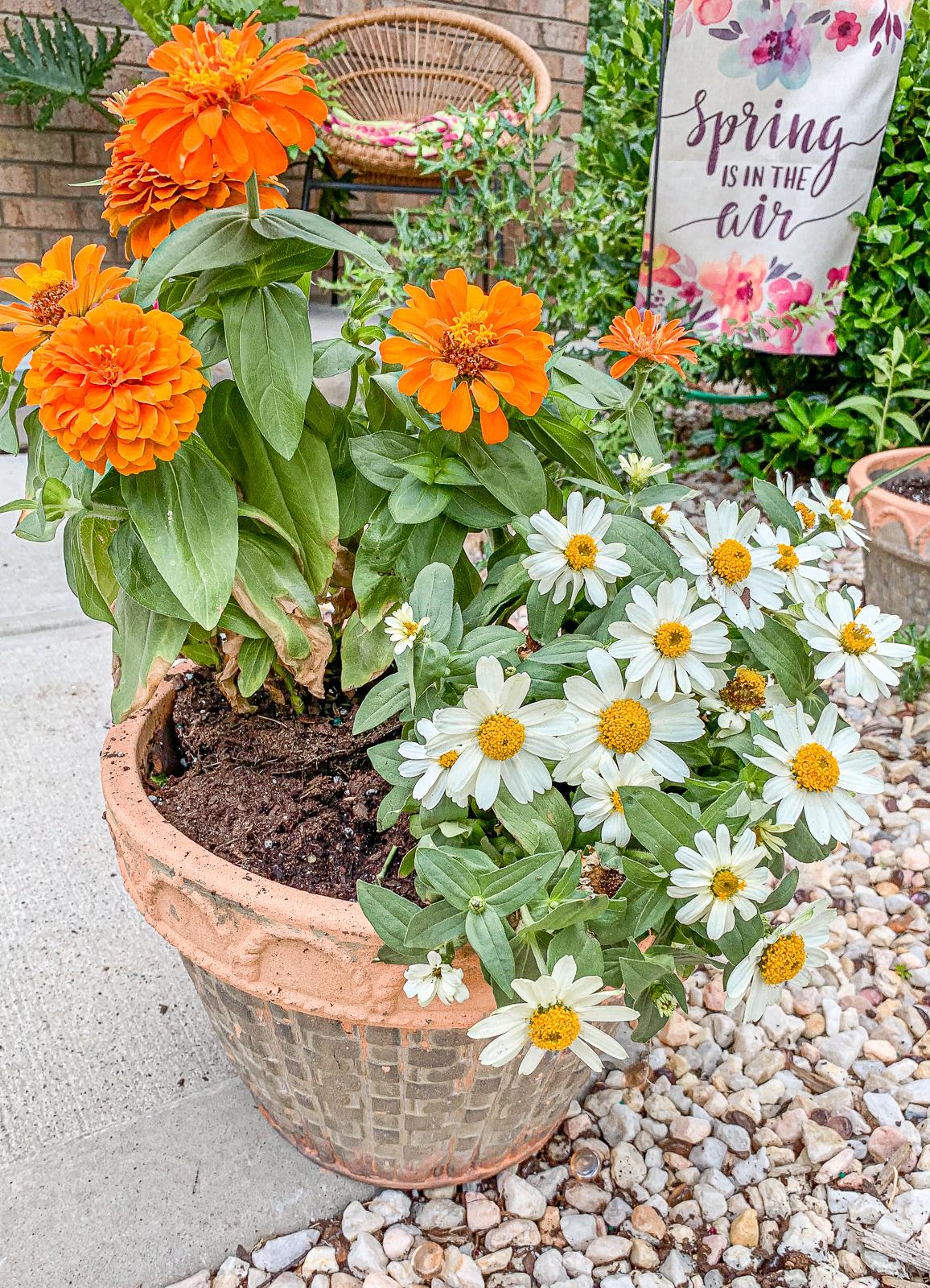summer, planting, diy, pots, yard, landscape, daisies,