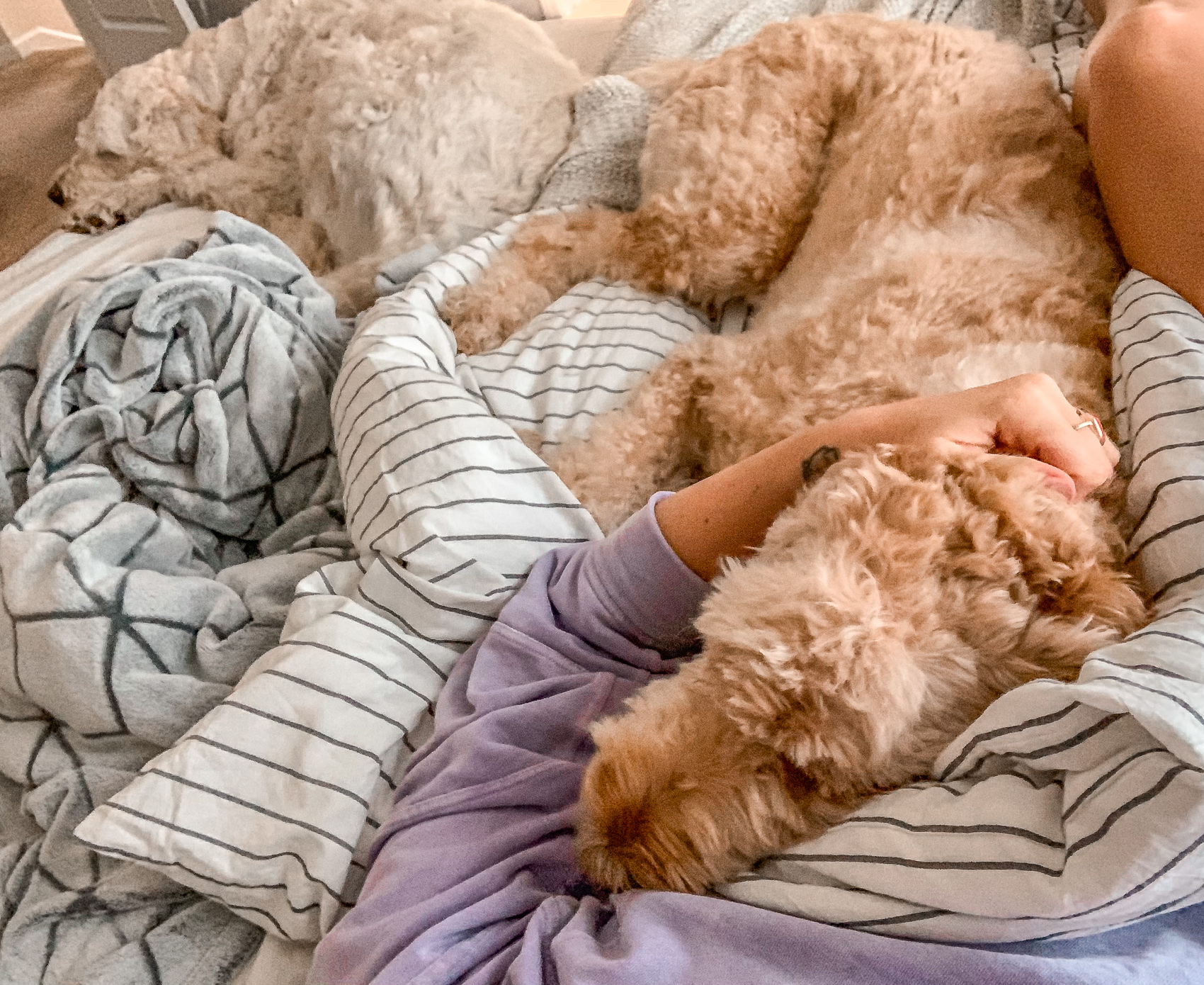 pups, recap post, simply taralynn, goldendoodle, lifestyle, pups, fun, life, blogging, blogger, day in the life