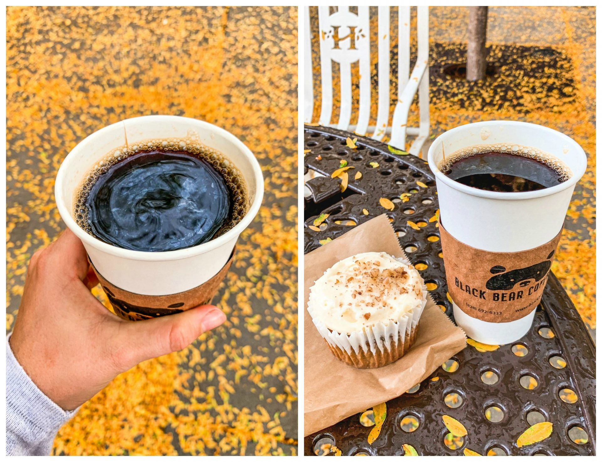 Pisgah forest, hiking, waterfall, North Carolina, Asheville, triple falls, nature, blog, hendersonville, black bear coffee, fall, carrot cake cupcake, gluten free, travel