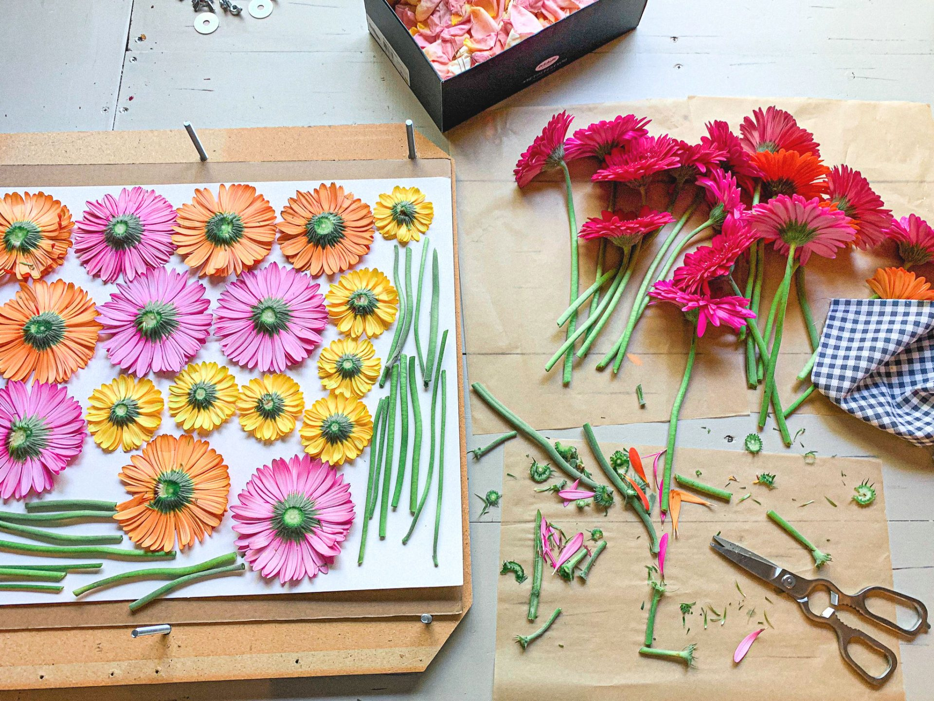 flower press, preserve flowers, Gerber daisies,