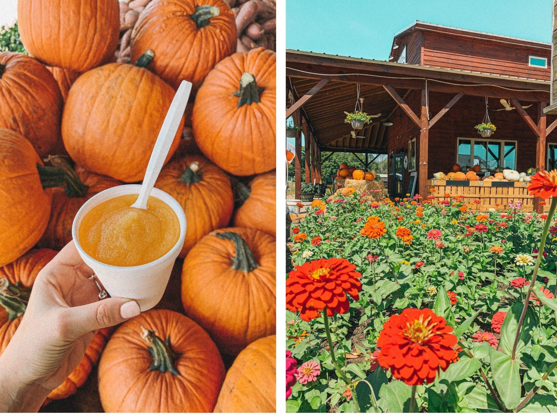 bush n vine, farmers market, fall, pumpkin patch, love