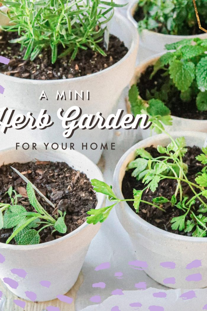 A Mini Herb Garden For You to Grow This Spring With Fun DIY Pots