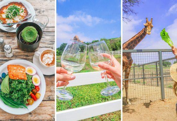 Malibu farms, california coast, restaurants, pacific highway, highway one, malibu wine safari, visiting malibu, LA, los Angelos, orange county, travel