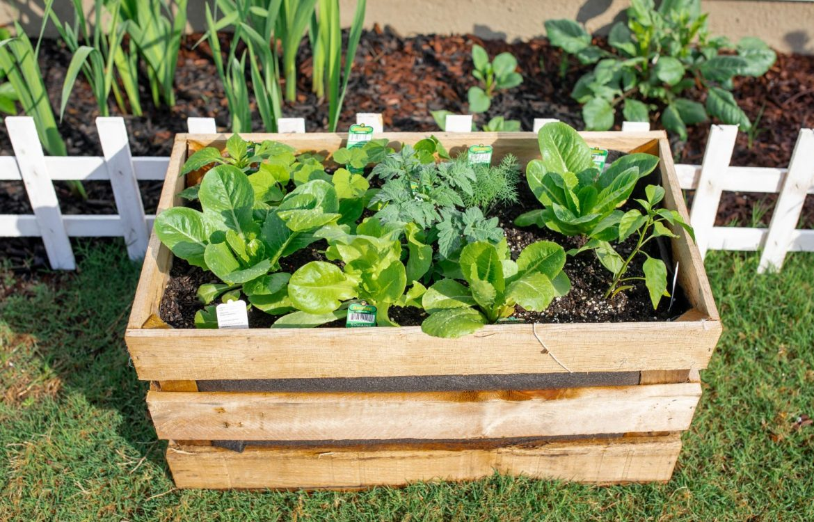 diy garden, potato crate, crate garden, vegetable garden, veggies, gardening, lettuce, food, harvest