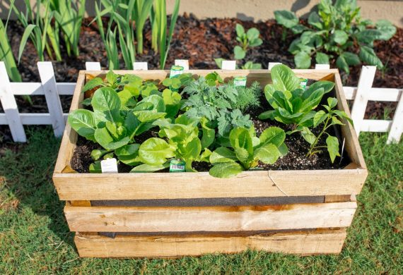 diy garden, potato crate, crate garden, vegetable garden, veggies, gardening, lettuce, food, harvest