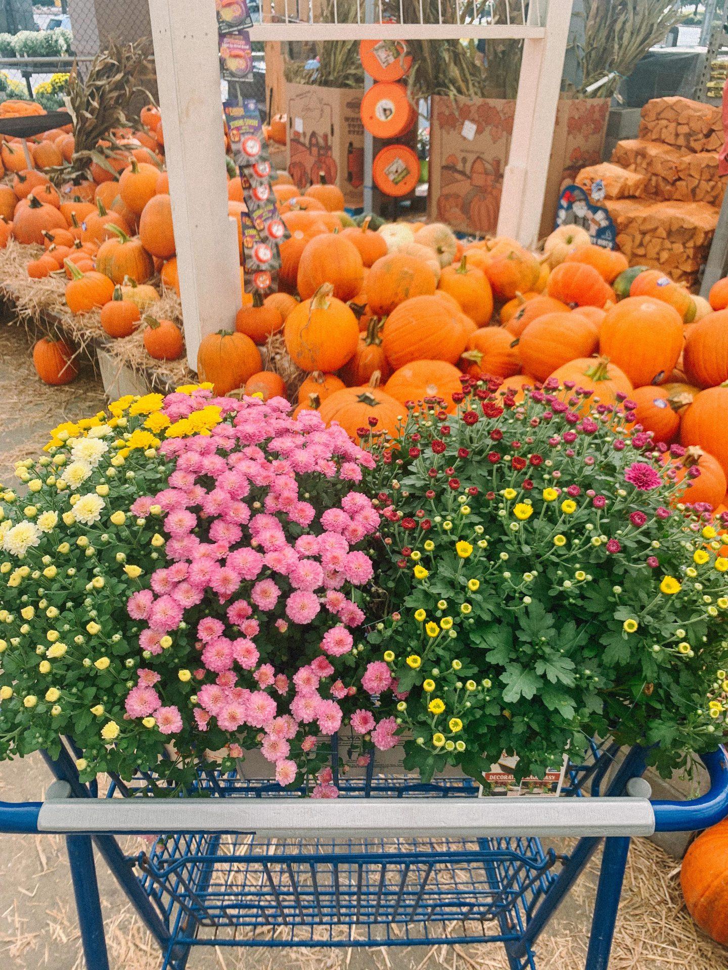 halloween, halloween decor, bats, pumpkins, plank cottage, brick, board and batten, cats, decorations, fall
