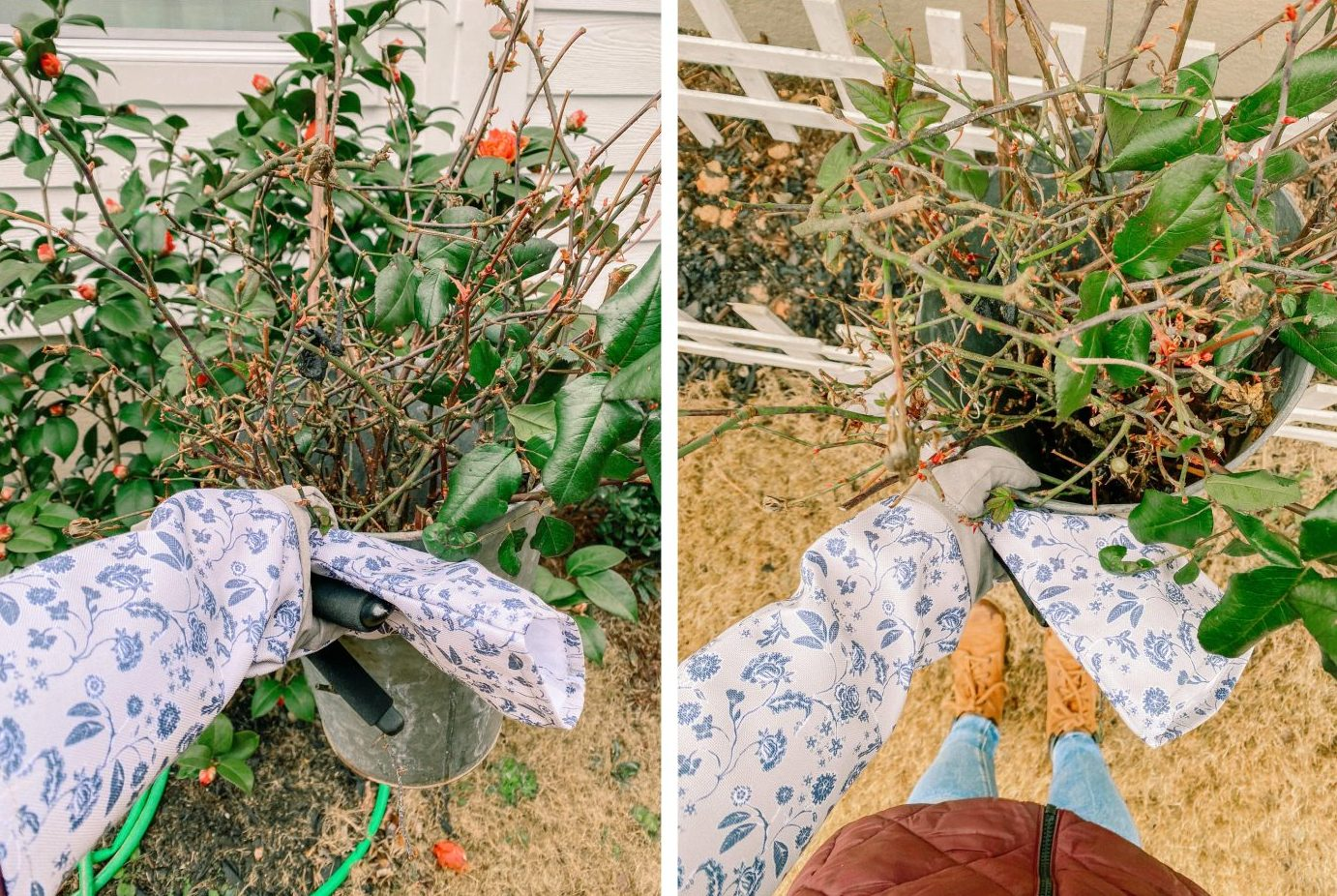 gardening gloves, pruning, prune, roses, fort mill, summer, spring, flowers, zone7, buds
