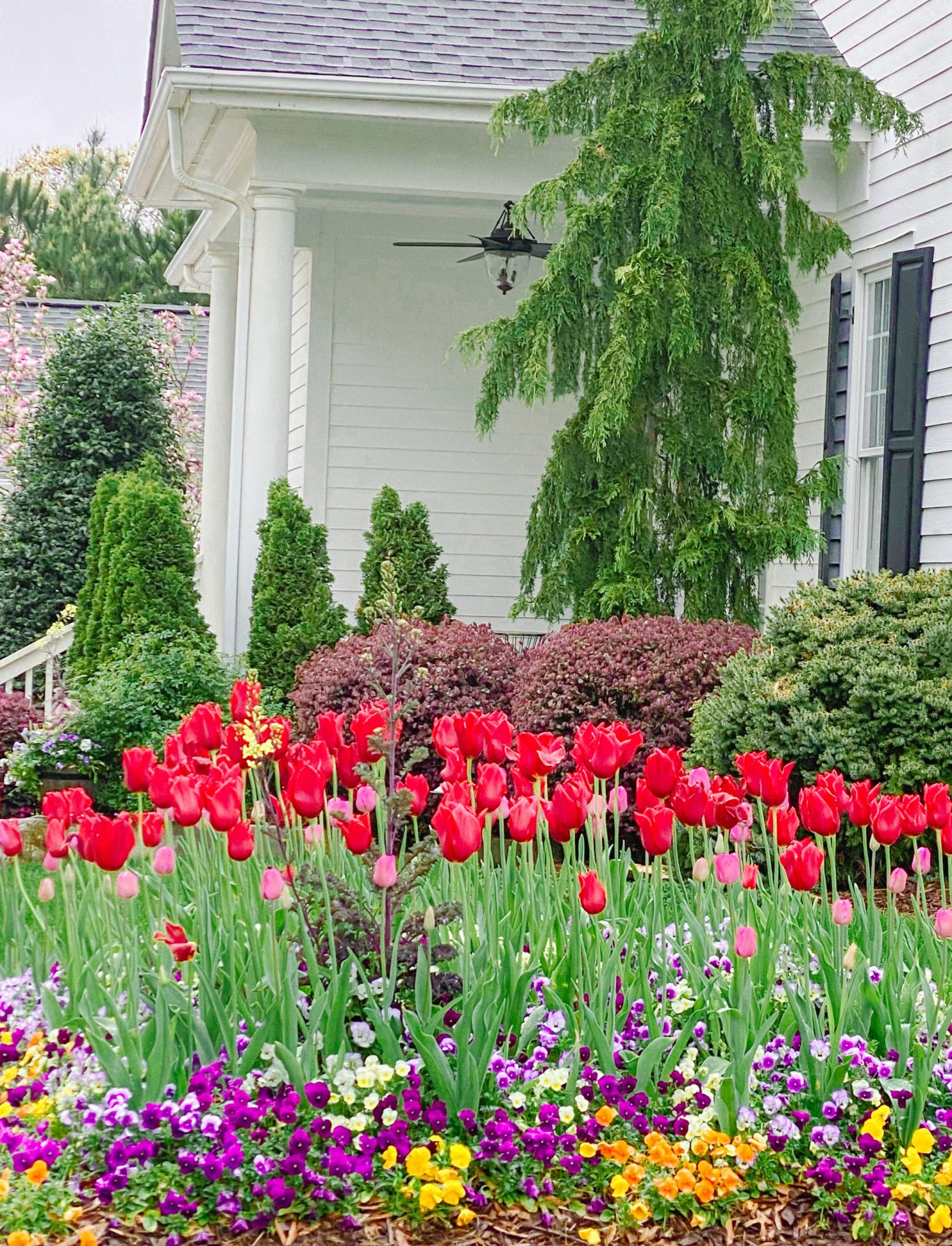Tulips, Fort Mill, South Carolina, Southern, Spring, South Flowers, April, Tulip Garden Bed