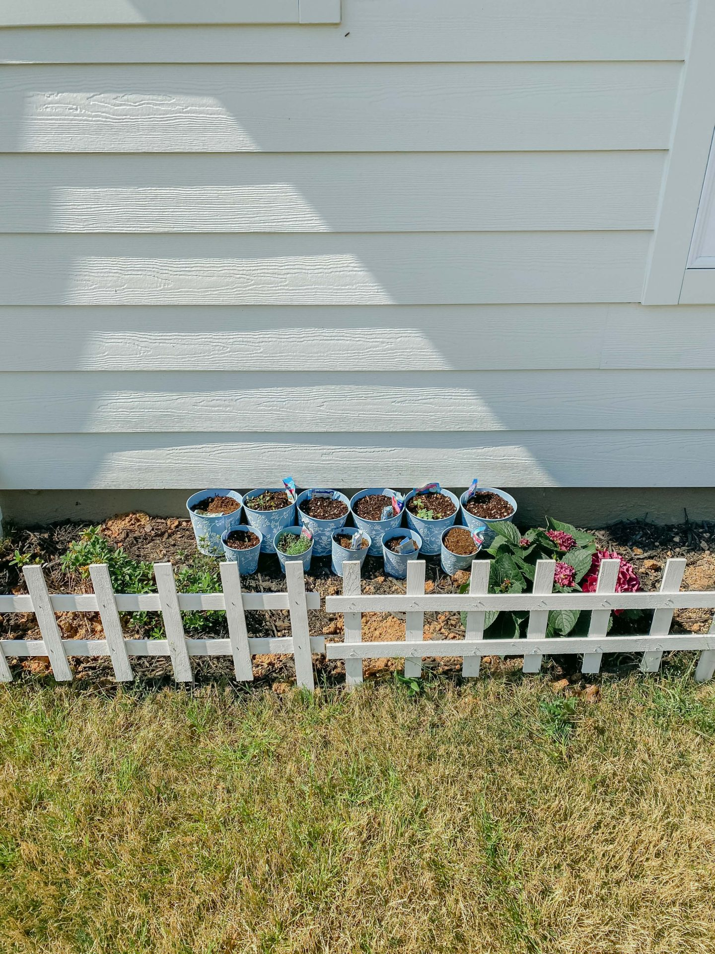 mini garden, seeds, potting, flowers, backyard, white picket fence, seeds, wild flowers, seedlings, seed, sprouts