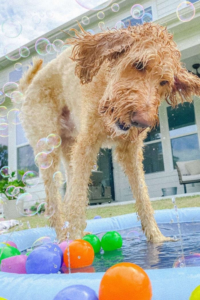 dog, dog need, dog entertainment, bubble machine, dog fun, fun dog, toys, amazon, pet