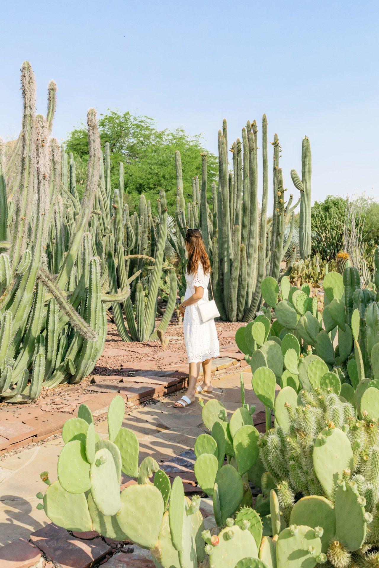 what to do in scottsdale Arizona, desert botanical gardens, botanical, cactus, scottsdale travel guide, travel to scottsdale, ultimate guide, scottsdale blogger, vacation