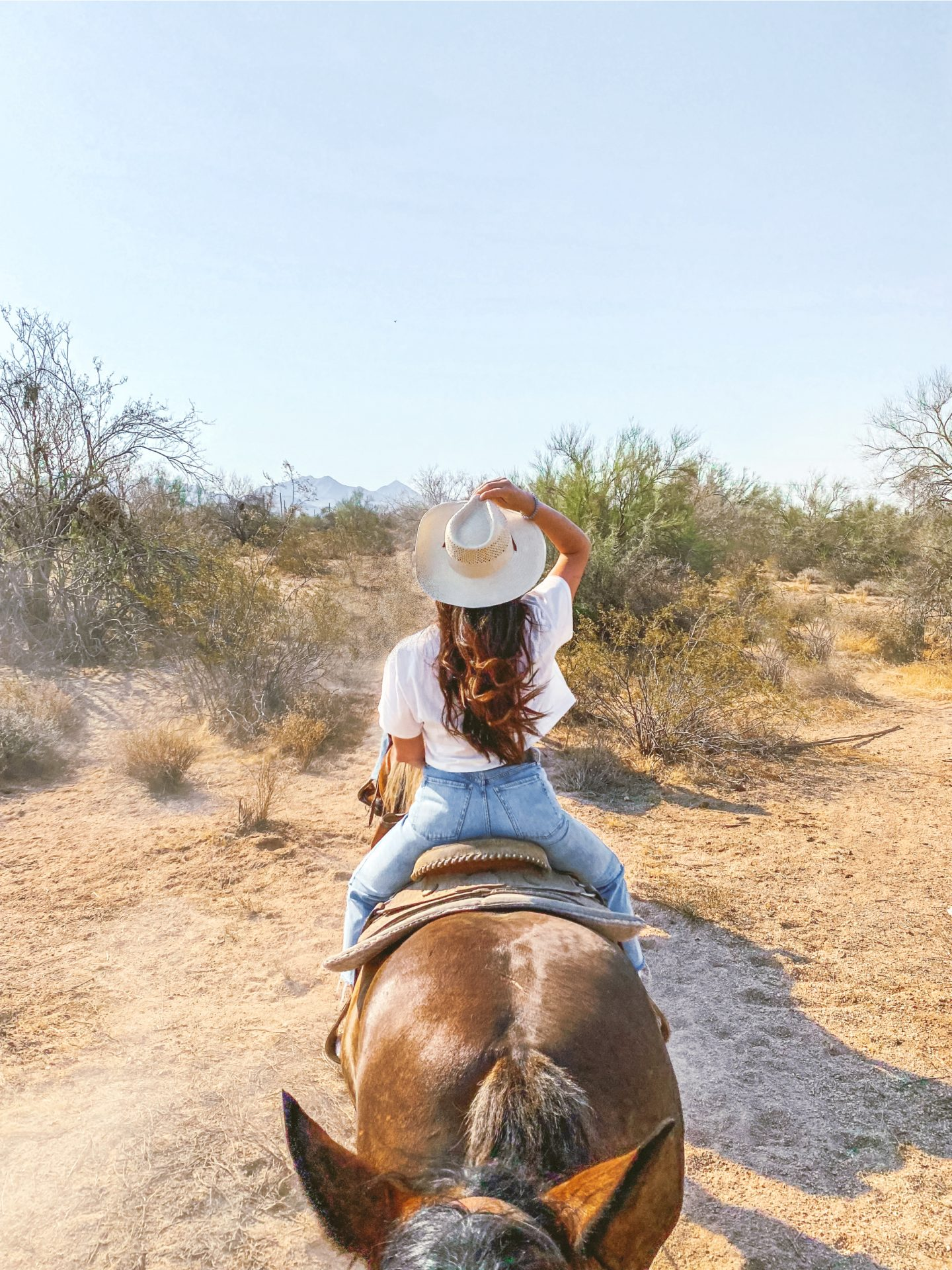 what to do in scottsdale Arizona, ultimate travel guide scottsdale Arizona, traveling, scottsdale, Macdonalds ranch, cactus, dessert, horseback riding, cowgirl, horseback riding, things to do, Arizona, travel blogger, photography, ranch, guide to scottsdale