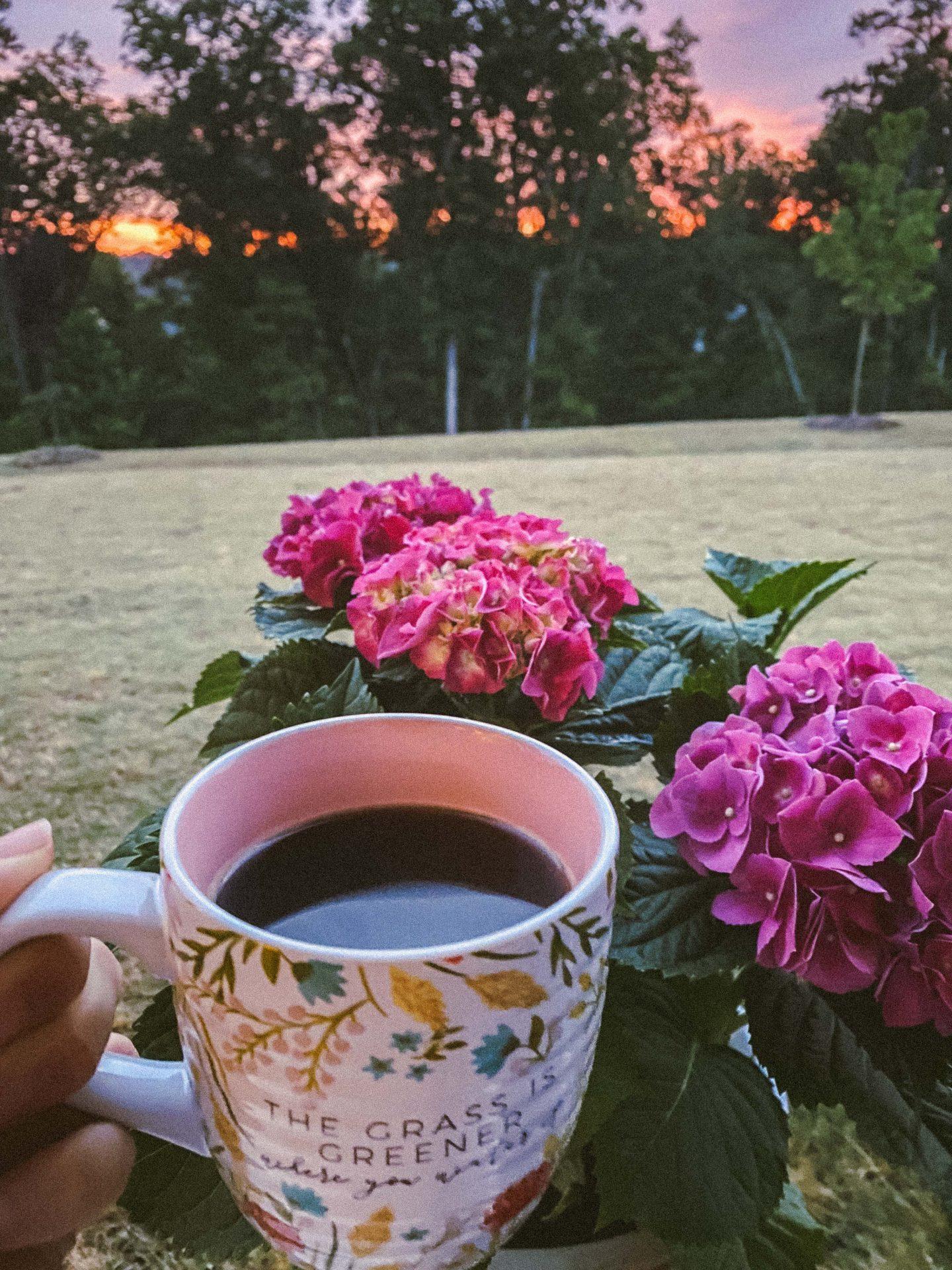 morning coffee, hydrangeas, masons bend, fort mill south carolina, trails, sunset