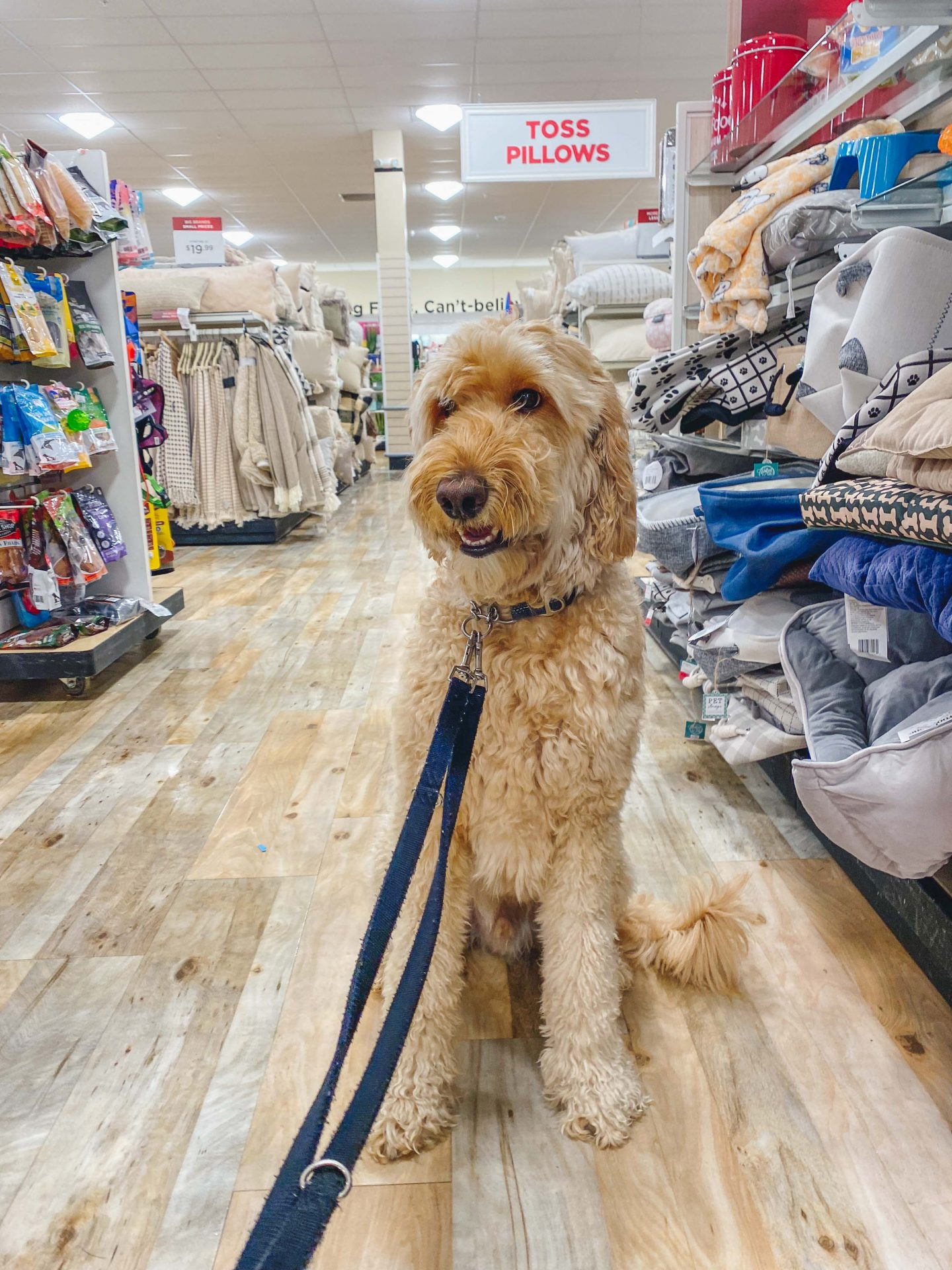 pet friendly places, is home goods pet friendly, bring my dog to home goods, tjmaxx allow pets
